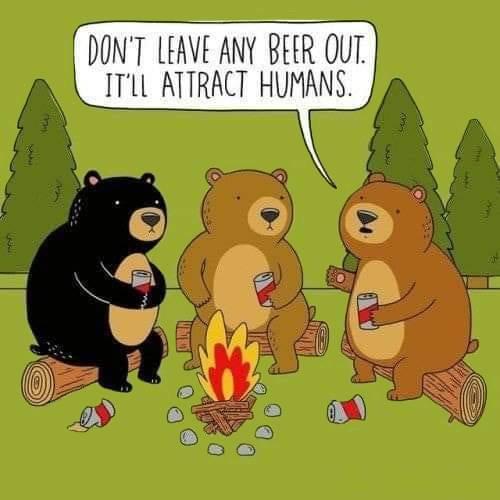 3 Bears Drinking Beer